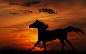 26-02-17-horses-wallpapers2805