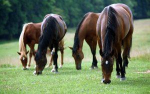 26-02-17-horses13098
