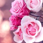 26-02-17-pink-roses-wallpapers1585
