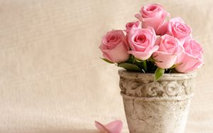 26-02-17-pink-roses-wallpapers1587