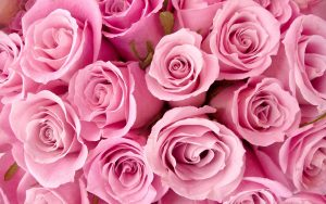 26-02-17-pink-roses-wallpapers1588
