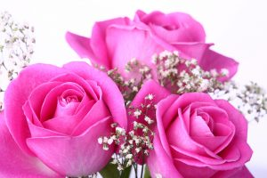 26-02-17-pink-roses-wallpapers1589