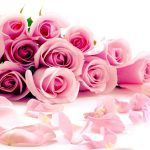 26-02-17-pink-roses-wallpapers1590