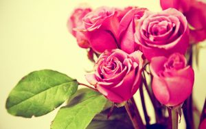 26-02-17-pink-roses-wallpapers1593