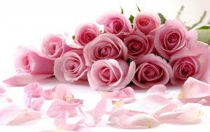 26-02-17-pink-roses-wallpapers1596