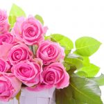 26-02-17-pink-roses-wallpapers1598
