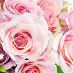 26-02-17-pink-roses-wallpapers1632