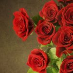 26-02-17-red-rose-wallpapers3081