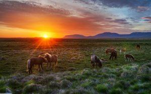 26-02-17-wild-horses-sunset11632