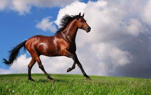 27-02-17-arabian-horse10657