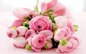 27-02-17-best-pink-roses16203