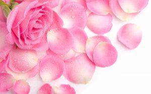 27-02-17-beutiful-rose-wallpapers12107