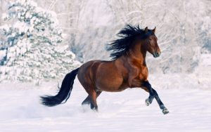 27-02-17-brown-horse-running10083