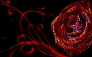 27-02-17-elegant-rose-wallpaper8924