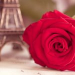 27-02-17-flower-red-rose-eiffel-tower-photo13304