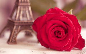 27-02-17-flower-red-rose-eiffel-tower-photo13304