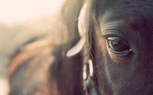 27-02-17-horse-eye-macro12080