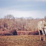 27-02-17-horse-field-nature16090
