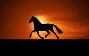 27-02-17-horse-running-sunset15397