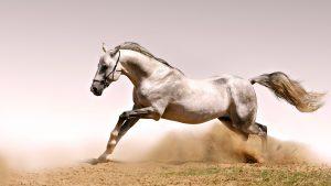 27-02-17-horse-running16057