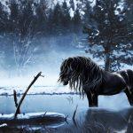 27-02-17-horse-winter10361
