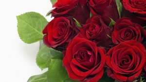27-02-17-hot-red-roses10465