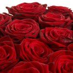 27-02-17-many-roses18016