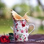 27-02-17-mood-cup-mug-spray-splash-roses-flowers10255