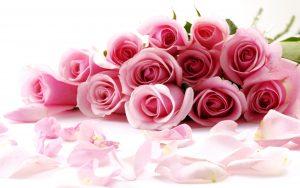 27-02-17-pink-rose-flowers16134