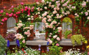 27-02-17-rose-garden17836