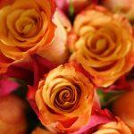 27-02-17-roses12990