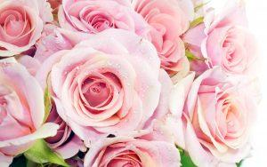 27-02-17-roses8597