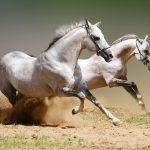 27-02-17-running-horse12265