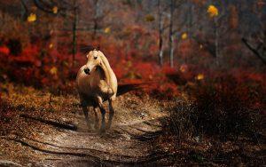 27-02-17-running-horse14091