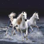 27-02-17-white-horses10093