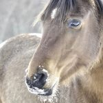 28-02-17-awesome-horse-close-up-wallpaper4625