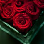 28-02-17-flowers-red-roses15482