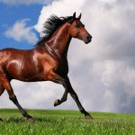 28-02-17-free-brown-horse-wallpaper5441