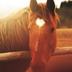 28-02-17-horse-close-up-wallpaper9323