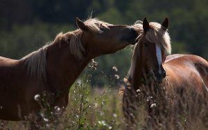 28-02-17-horse-tender15553
