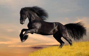 28-02-17-horse-wallpaper7412