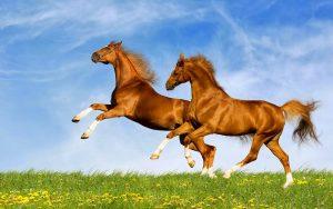 28-02-17-horses7118