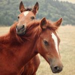 28-02-17-horses7410