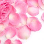 28-02-17-pink-rose-petals12270