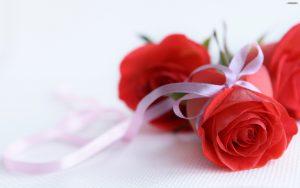 28-02-17-rose-wallpaper7700