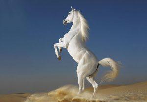 28-02-17-white-horses11350