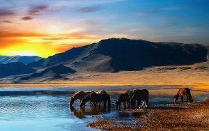28-02-17-wild-horses-lake14212