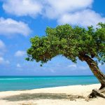 Beach-In-Aruba-Wallpaper-For-Desktop