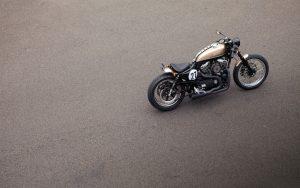Motorcycle-Bald-Terrier-Hd-Image