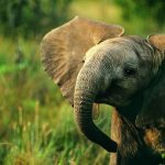 23-02-17-baby-elephant-nature18587